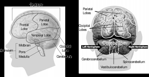 brain-148131_1280